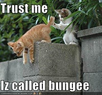 Lolcats bungee