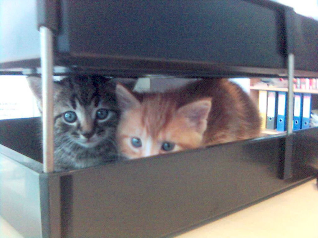 Two kittens in an in-tray